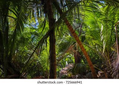 Trail around La Digue island through the jungle and Grand Anse, Petite, Cocos, Caiman, Fourmis, Banane, Grosse Roche, Gaulettes, Patates ans Severe beaches. Seychelles