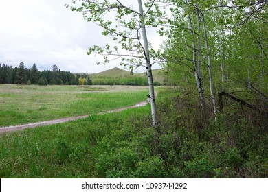 Trail and aspen trees at Clay Flat near Missoula, Montana.