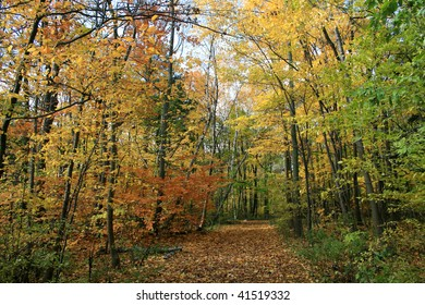 The Trail in autumn forest