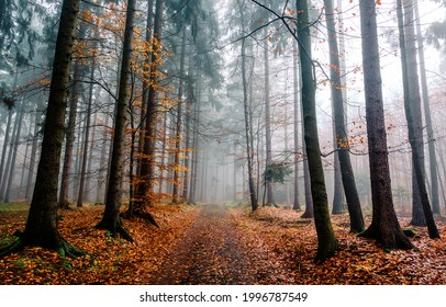 A trail in the autumn misty forest. Misty forest trail in autumn scene. Autumn misty forest trail. Autumn forest trail in mist