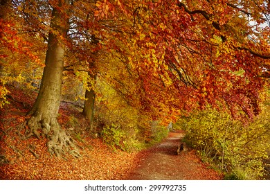 Trail in beautiful autumn forest