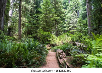 Trail in Beautiful Redwood Forest in Northern California Jedediah Smith Redwoods State Park, California, USA