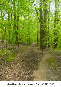 Trail curving through a forest during spring at Blockhouse Point Conservation Park in Potomac, Maryland.