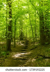 Trail curving through a forest with wooden steps during spring at Blockhouse Point Conservation Park in Potomac, Maryland.