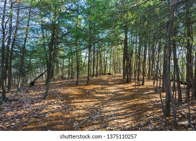 Trail Cuts Through Young Forest in Kentucky foothills
