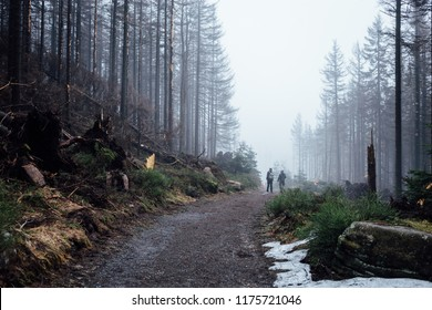 Trail in the fog