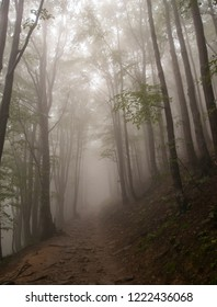 Trail in the foggy, misty forest in Bieszczady National Park, Poland, Europe