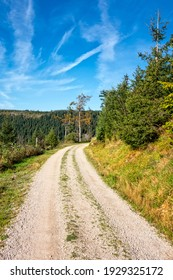 Trail footpath through green forest grass landscape, Black Forest, Germany