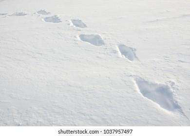 A Trail Of Footprints Through Fresh Deep Snow