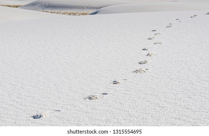 A trail of footsteps left diagonally across a background of gysum dunes at White Sands National Monument in New Mexico.