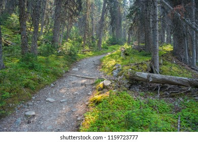 Trail In The Forest