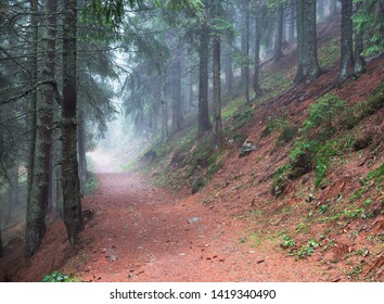 Trail in the forest. Carpathians, Ukraine.