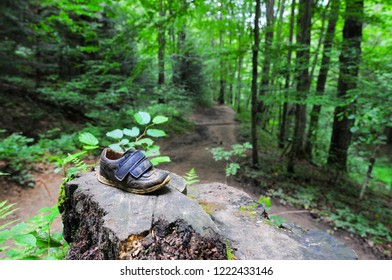 Trail in the forest with child shoe left on the tree trunk in Bieszczady National Park, Poland, Europe