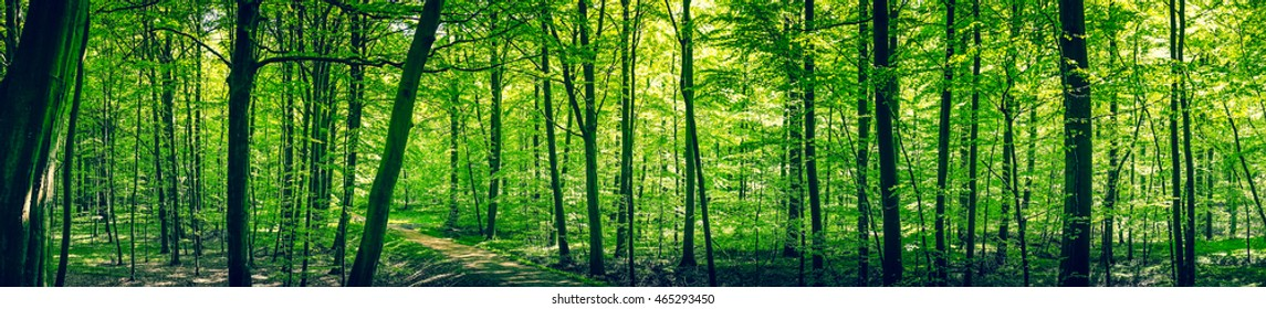 Trail in a green forest panorama landscape in the spring
