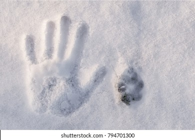 trail of hand and trail of dog on white snow, top view