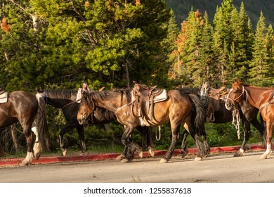 Trail Horses Being Herded Toward Horse Back Riding Center