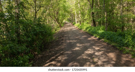 trail into the woods with nice green spring color