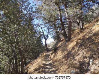 Trail leading through black oaks, California