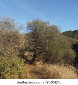 Trail leading through a canyon, Malibu, CA