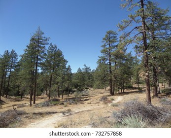 Trail leading through a pine-dotted meadow, California