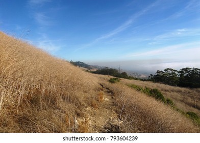 Trail leading through a rolling meadow by the ocean, California