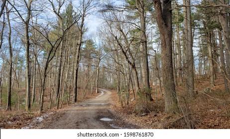 Trail leading through the woods, Massachusetts