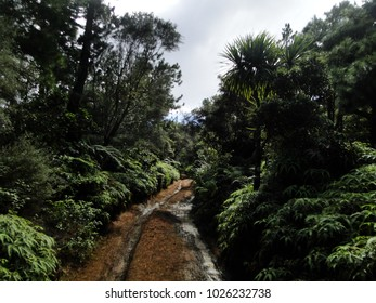 A trail leads deeper into a forest in Lanai.