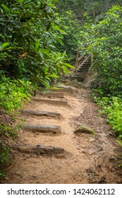 A trail leads to steps in the forest