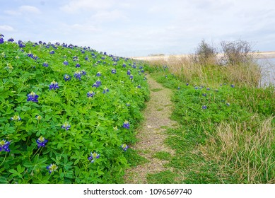 A Trail Lined with Bluebonnets along Brush Creek Lake in Texas