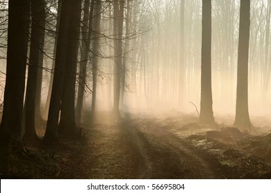 Trail in the misty forest at dawn at the beginning of spring.