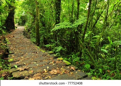 Trail in Monteverde Reserve, Costa Rica