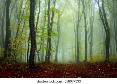 Trail in mystic foggy forest
