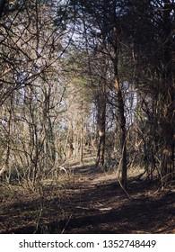 A Trail At Olde Izaak Walton Park, Leesburg, Virginia