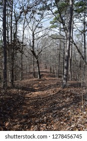 Trail on a hill in Big Hill Pond State Park Tennessee