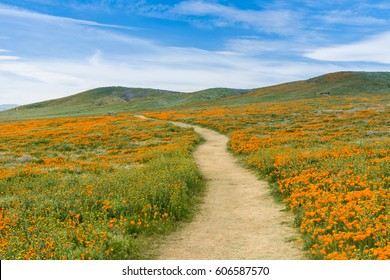 Trail on the hills of Antelope Valley California Poppy Reserve during blooming time
