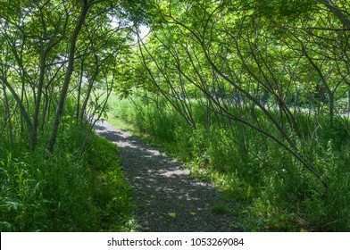 Trail in a park in summer time. Lynde Shores conservation area, Whitby, Ontario, Canada
