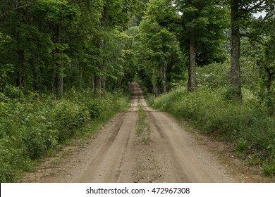 The trail passes through a large forest