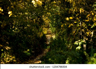 A trail, path in the forest surrounded by woodland and trees. Middle autumn season, around september.