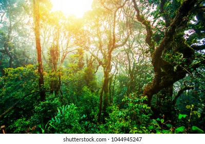 Trail in rain forest by early morning before and during sunrise. Great place for hiking