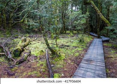Trail in rain forest near Cradle Mountain, Tasmania