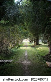 trail in the recreation parks