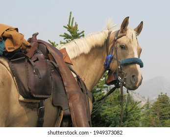 Trail riding horse head and western tack