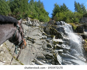 Trail riding horse looking up at waterfall