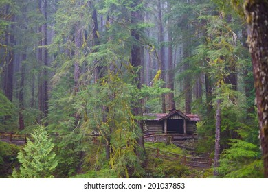 A trail shelter hides among the mist and trees in Olympic National Park, Washington, USA