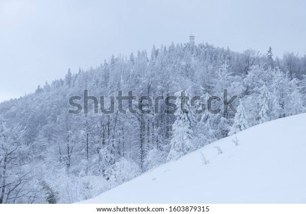 trail-snow-forest-nature-tower-600w-1603