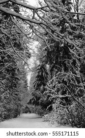 A trail in a snowy forest. Russia, Moscow, January 2012.