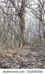 Trail in Springfield MO