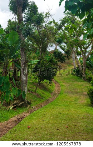 trail through coffee plantation among foothills of cerro de punta in puerto rico