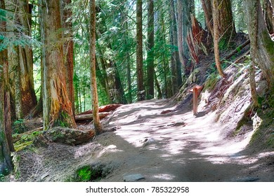 Trail through conifer forest near the Grove of the patriarchs, Ohanapecosh, Mount Rainier National Park, Washington