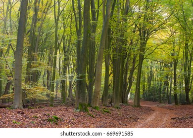 Trail through a forest in an autumn landscape